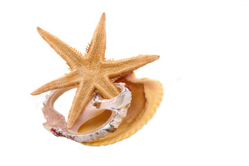 The Starfish and Shell on the white background