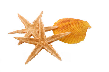 Two Starfish and one Shell on the White Background