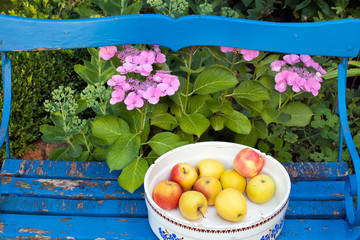 Apples on a Container on Top of Wooden Bench.