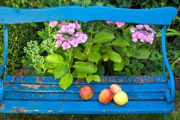 Fresh Apples on Top of Wooden Bench at the Garden.