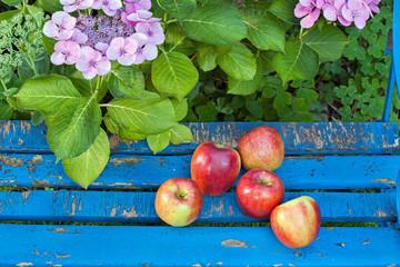Sweet Apples on Wooden Garden Chair.
