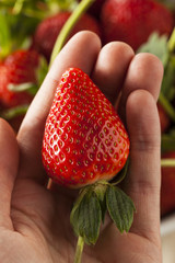 Raw Organic Long Stem Strawberries