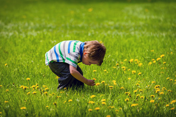 Young Boy Outside Picking a Dandelion Flower
