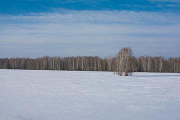 Russian field,2