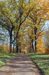 Осенний пейзаж в парковой зоне.