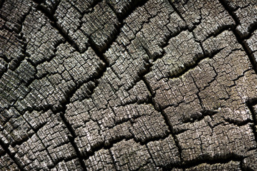 Old Cracked Wood Log Close Up Background Texture