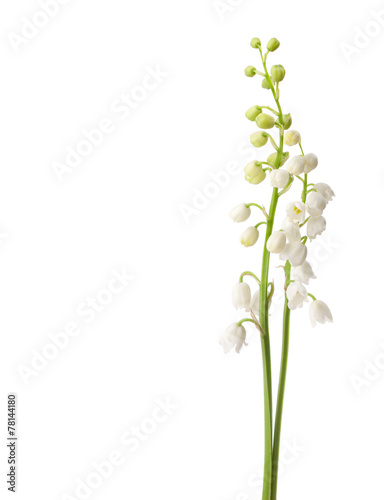 Poster Lelietje van dalen Two flowers isolated on white. Lily of the Valley