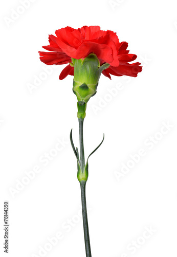 canvas print picture red carnations flower isolated on white background