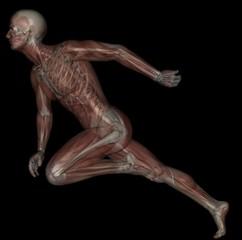 Run Muscle