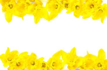 Osterglocken, Osterkarte