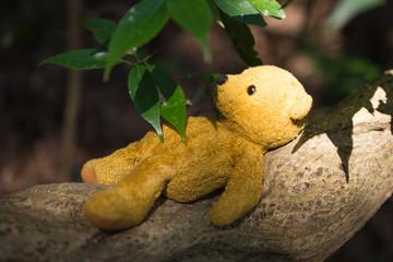 木陰で眠るテディーベアー