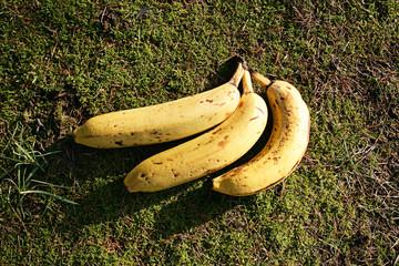 bio bananen moss gras gesundheitlich vegan natürlich