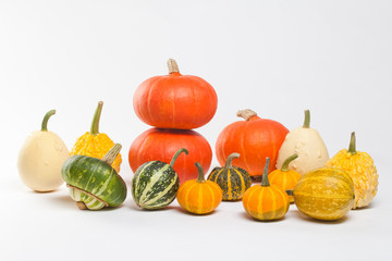 Pumpkin Varieties. Colorful