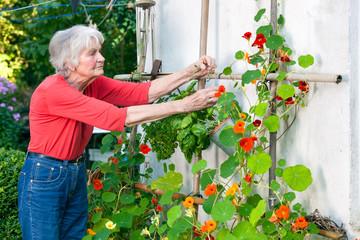 Senior Woman Taking Care of her Flower Vine.