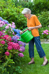 Old Woman Watering Pretty Flowers at the Garden.