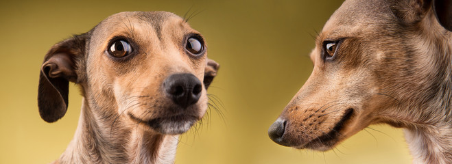 Two funny dogs portrait