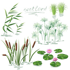 Wetland Plants Set