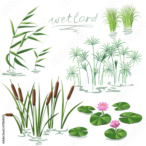 Wetland Plants Set - 78164553
