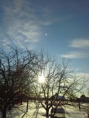 Засиделось солнце на ветвях деревьев!