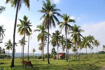 palm trees in rural village