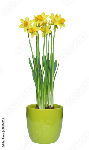 Poster Narcis narcisses jaunes