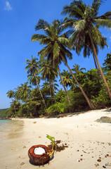 Beach. Paradise. Coconut tree.