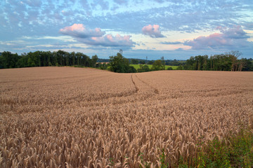 Panoramic Nature View of Brown Hay Field