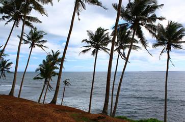 Пальмы на склоне у индийского океана