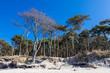 canvas print picture - Küstenwald an der Ostsee