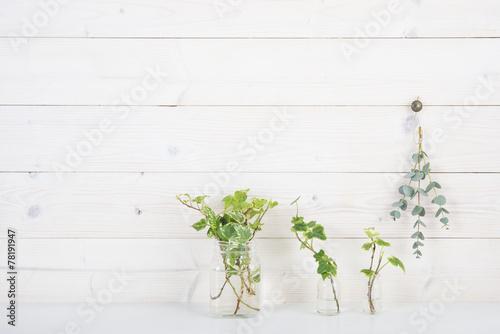 白い壁 植物 アイビー