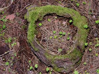 albero cavo