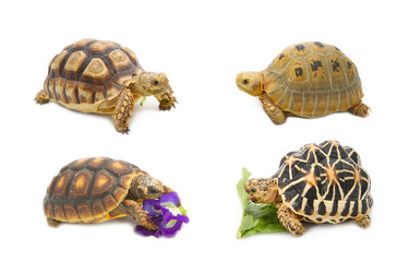 Collect of tortoise , exotic animal