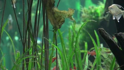 Underwater Plants, Undersea Botany