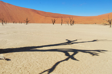 Trees and landscape of Dead Vlei desert, Namibia, Africa