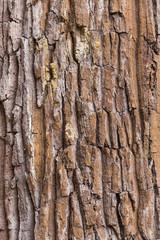 skin of tree texture