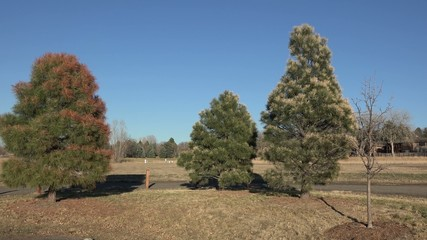 Local Government Poisoning Trees