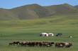 Troupeau de chevaux et yourtes dans la steppe