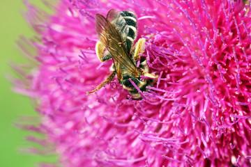 bee on pink flower springtime