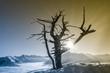 canvas print picture - Bergsonne und ein alter Baum
