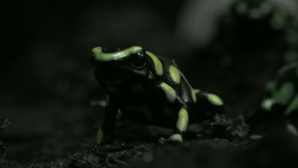 Frogs, Toads, Amphibians, Animals, Nature