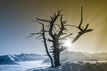 Bergsonne und ein alter Baum