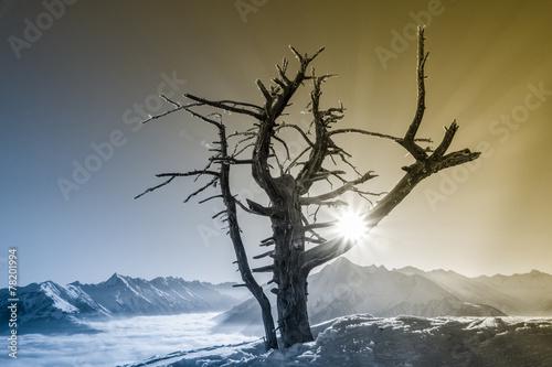 canvas print picture Bergsonne und ein alter Baum