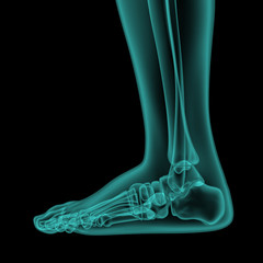 side x-ray view of human foot and ankle