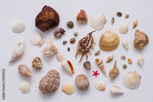 Fototapeta Collection of sea shell