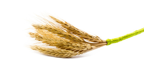 Ears of wheat isolated on a white background