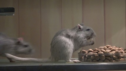 Mouse Eating, Mice Food, Rodents