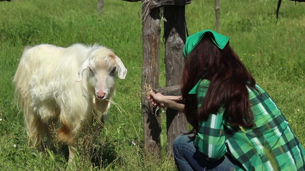Farm girl feeding goat