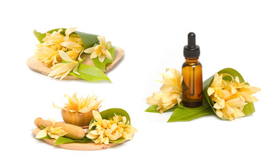 champaka essential oil for spa aromatherapy