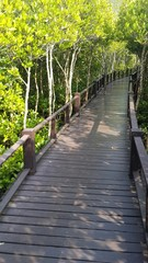 Wooden bridge in mangrove national park in Thailand