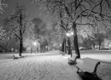 Winter snow park - 78211548